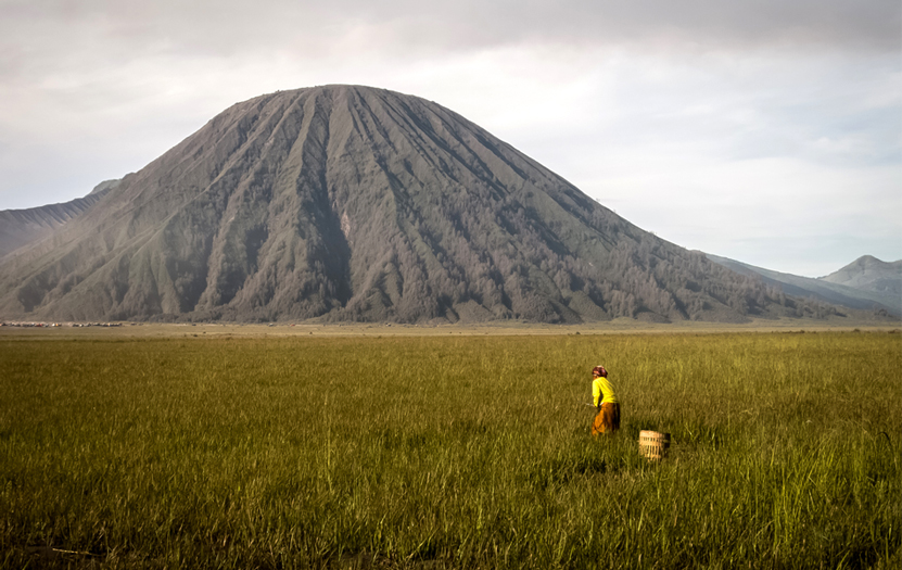 A woman harvesting onions in an ocher-colored meadow at Mount Bromo's caldera and the imposing volcano rises in the background.