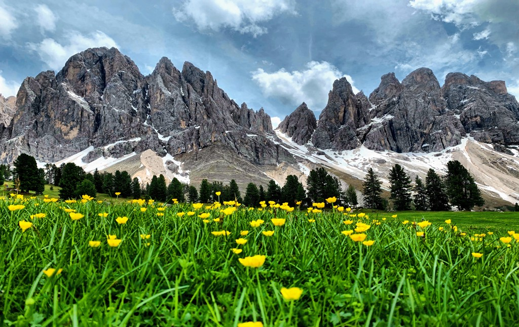 A meadow with flowers and mountains in the background in the Puez-Odle Natural Park, one of the most famous places in the Dolomites.